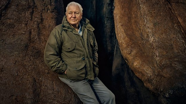 Sir David Attenborough (credit: BBC)