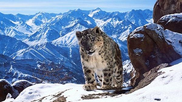 David Attenborough will present Planet Earth II