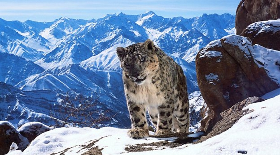David Attenborough will present Planet Earth II
